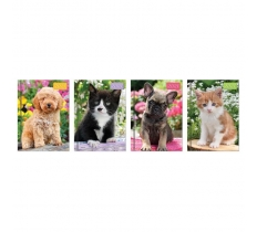 2020 Pocket Diary WTV: Puppies & Kittens Photographic